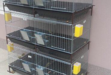 Izrada kvalitetnih kaveza za pilice i zeceve. Podovi kaveza, kao i tepsije za izdjubravanje su plasticni, dubina tepsija je 10cm, tepsije su dugotrajne i otporne na amonijak. Vise informacija o ponudi kaveza na nasem web sajt-u.: http://www.kavezi.rs/ E-mail. kavezimisa@gmail.com Kontakt tel.: Miša, 064/00-377-92