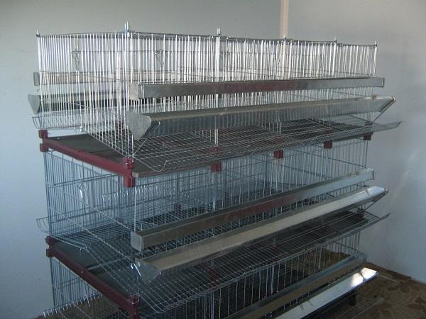 Kavezi za koke nosilje – Novi Sad