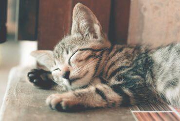 POKLANJAMO male mačiće NIŠ