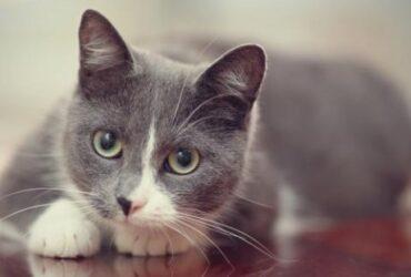 Čuvanje mačaka