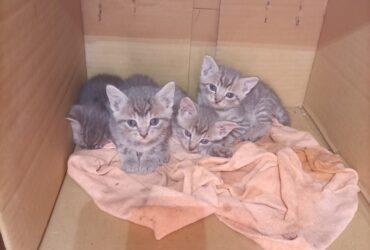 Mačići na poklon