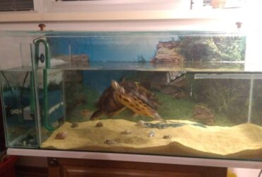 prodajem akvarijum-terarijum