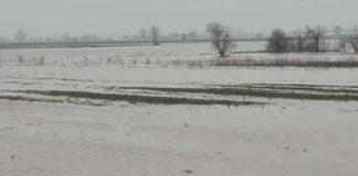 Poplavljene oranice