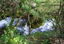 Izvor i reka Ropot na Suvoj planini