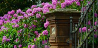 Nišlije biraju najlepše uređeno dvorište ili balkon