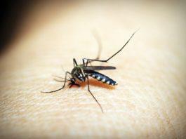 Ublažite svrab od ujeda komaraca