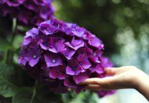 Besplatne radionice o gajenje cveća u plasteniku u Nišu