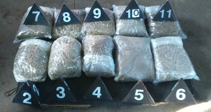 Zaplenjena marihuana; Foto: MUP