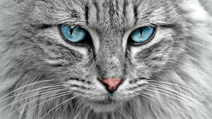 Svetski dan mačaka