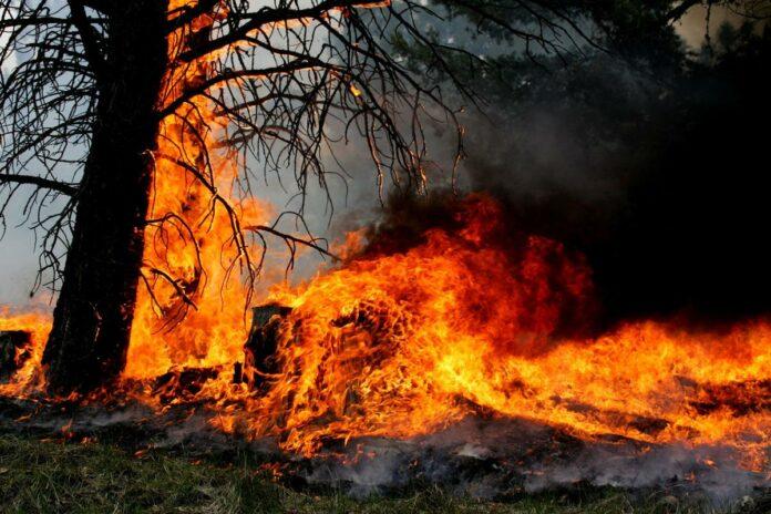 Uprava za vanredne situacije u Nišu apeluje na građane, s obzirom na to da je, prethodnih nedelja, registrovano povećanje broja požara na otvorenom