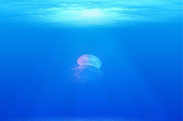 Svetski dan okeana