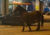 konj u noćnom provodu