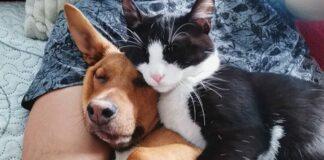 Prijateljstvo mačke i psa