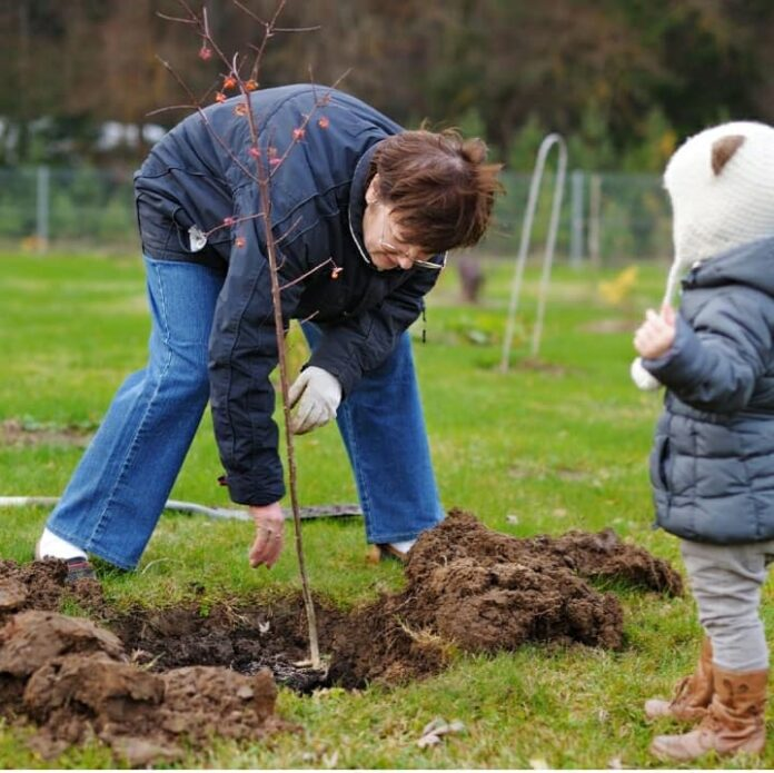 Zasadi svoje drvo