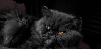 svetski dan crnih mačaka