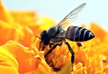 svetski dan medonosnih pčela