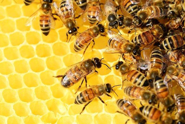 pčelinji otrov