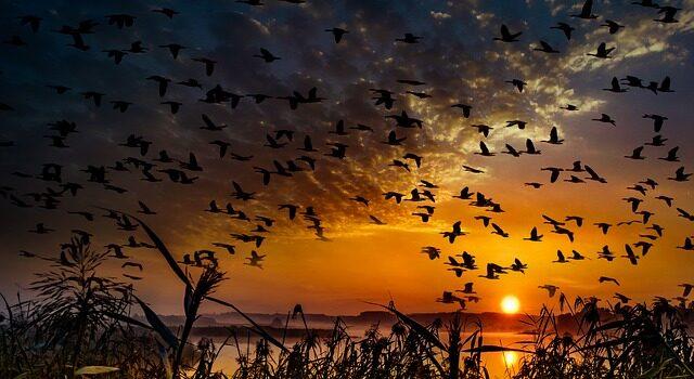 posmatranje ptica