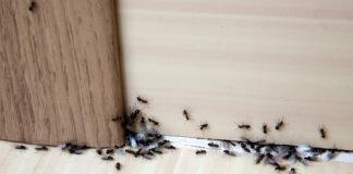 kako se rešiti mrava