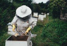 Svetski dan pčela